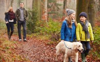 Win! An autumn dog walking bundle from Bob Martin