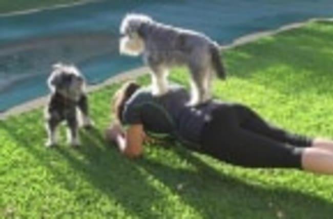 The Dog Fitness Craze That's Hitting Australia