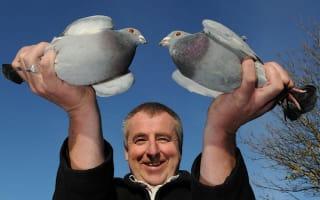 Pigeon fancier admits foul play