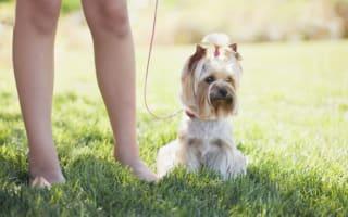 Dogs poisoned in London park: Police hunt for killer