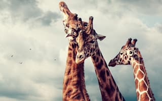 Best holiday destinations for animal lovers