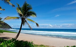 Reunion island warned: 'Do more to protect tourists from shark attacks'