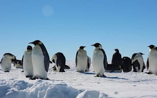 Revealed! How penguins survived the ice age