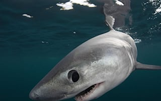 Warning as warm waters could attract sharks to Britain this weekend