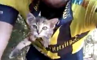 Cyclist saves tiny orphaned kitten by tucking him in his shirt