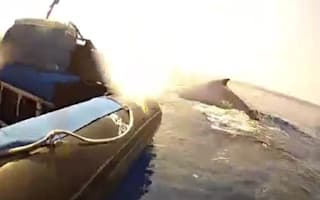 Amazing video: Humpback whale delights tourists