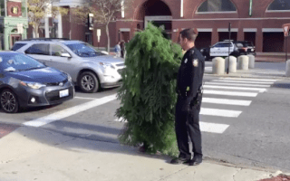 Man arrested after dressing as a tree and blocking traffic