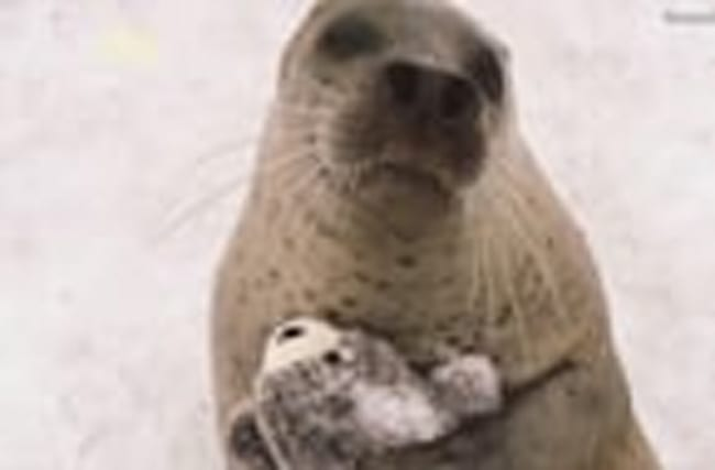 Photos of a Seal Hugging a Toy Version of Itself is Cuteness Overload