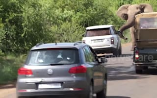 Angry bull elephant charges at safari vehicles