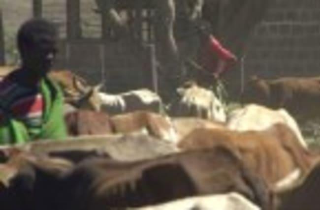 Armed herders invade protected lands in Kenya