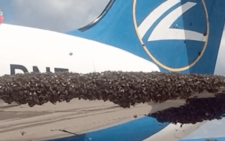 Swarm of bees attacks passenger plane in Moscow