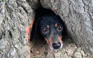 Dog rescued after somehow getting trapped inside a tree