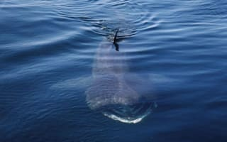 Incredible footage of 30 basking sharks swimming off Scotland