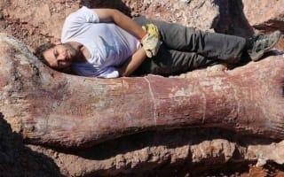 'Biggest ever dinosaur' found in Argentina