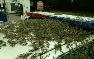 Swarm of insects turns US bridge into slippery nightmare