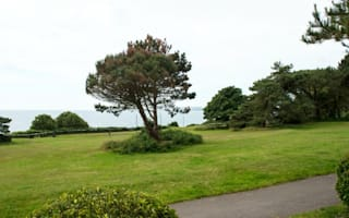 Trees blocking the sea view have been poisoned
