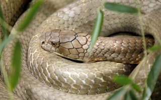Keeper at UK safari park airlifted to hospital after venomous snake bite