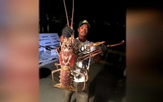 Fisherman releases rare 14 pound lobster back into sea
