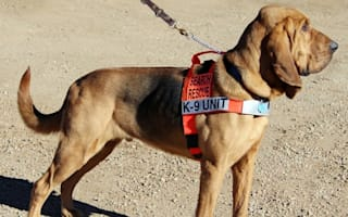 Dog voted mayor of town in Colorado (yes, really)