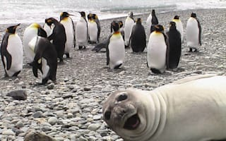 Best photobombs from around the world: Funny holiday photos