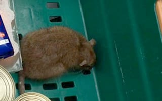 Teen has panic attack after finding rat in Tesco delivery