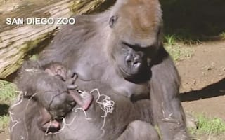 Rare baby gorilla born at safari park