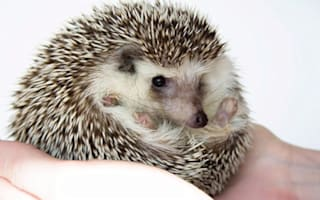 Dream job? Hedgehog Officer wanted by Suffolk wildlife trust