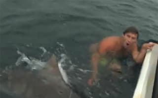 Video: Daredevil fends off tiger shark with bird cage