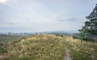National Trust buys Thomas Hardy countryside
