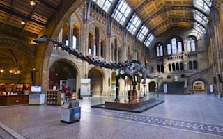 "Natural History Museum to take down ""irrelevant"" diplodocus skeleton"