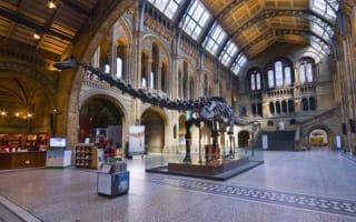 "Natural History Museum to take down ""irrelevant"" diplodocus skeleton"