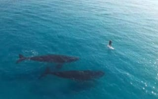 Incredible moment huge whales meet paddle boarder (video)