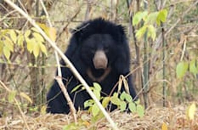 Just like the film! Man survives Revenan-style bear attack in forest
