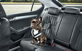 Skoda creates doggy seatbelt