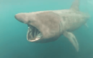 Surfer almost swallowed by huge shark in Cornwall (video)