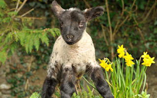 Easter holidays 2014: 20 great days out in the UK for the kids