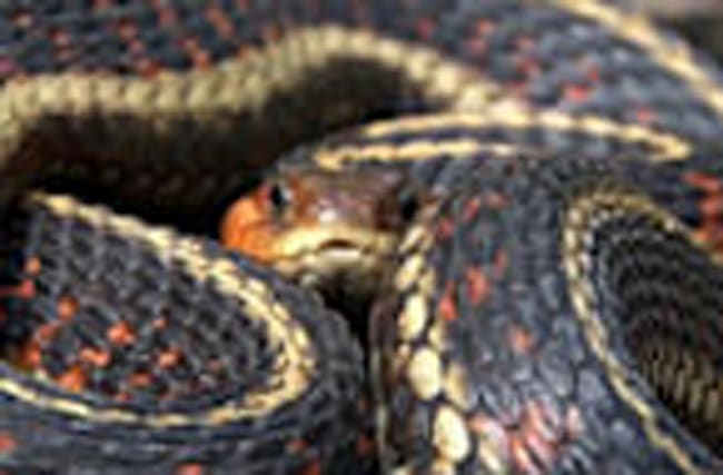 Snakebites are on the Rise, and These States are the Riskiest