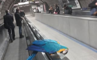 Mystery parrot spotted riding London Underground escalator