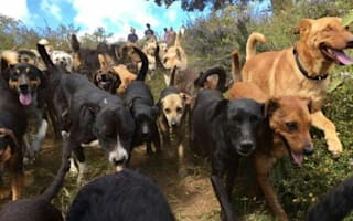 Shelter in Costa Rica cares for 900 dogs