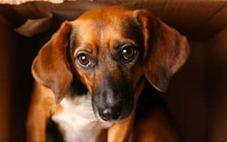 Dog thefts on the rise across the UK