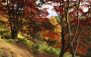 Ten of the best: British autumn walks