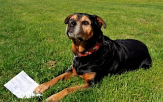 Police probe rottweiler voting card