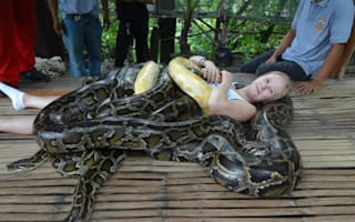 Introducing the zoo offering giant snake massages