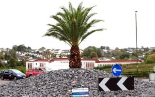 Torquay Council blew £11,400 on a single palm tree