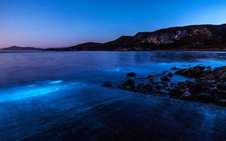 Tasmania beach turns luminous blue: Beautiful images