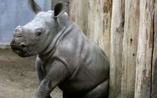 World Rhino Day: Let's make some noise