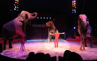 Circus keepers save frozen elephants with buckets of vodka