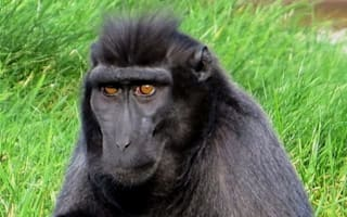 Two monkeys escape from cage at Hampshire zoo