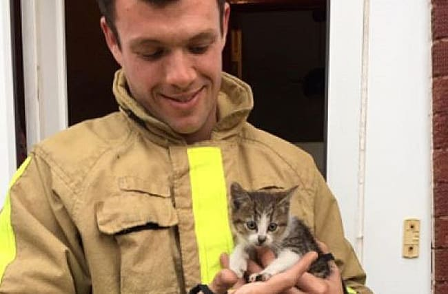 Kitten rescued after travelling 10 miles stuck in a car engine