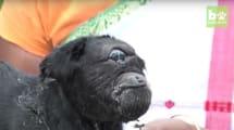 Este pequeño cabrito cíclope es completamente real y está en La India